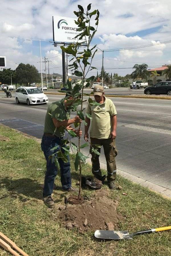 Reforestan tras tala clandestina de árboles en Bugambilias