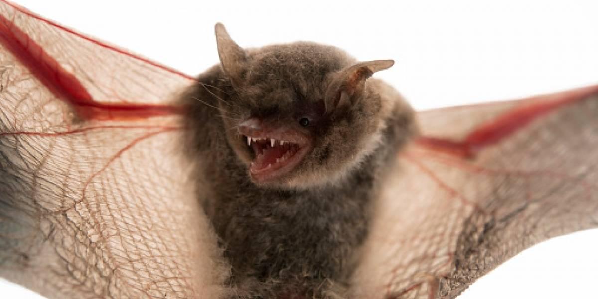 Una persona murió de rabia tras ser mordido por murciélago