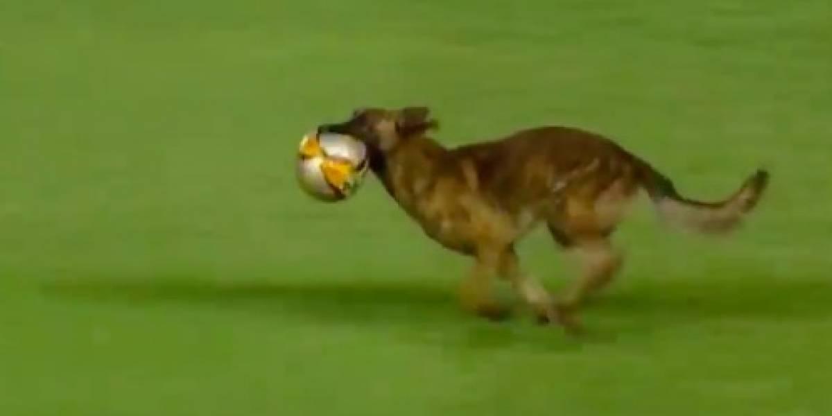 VIDEO: Canino roba el balón en pleno partido de futbol