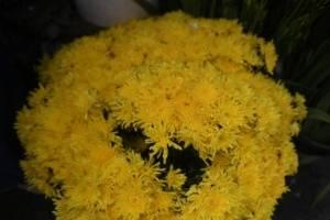 cementeriosventadefloresfotoomar7-21a49ddf834b10bd70e855b8f98b97a7.jpg