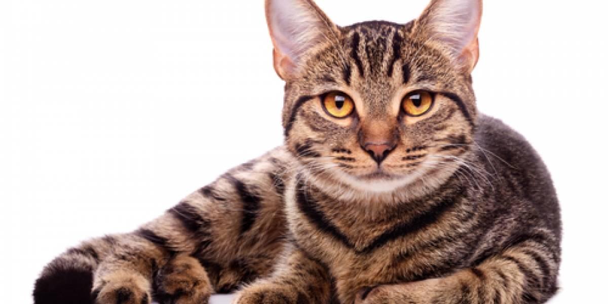 Investigan a soldados que lanzaron un gato a varios perros para que lo mataran