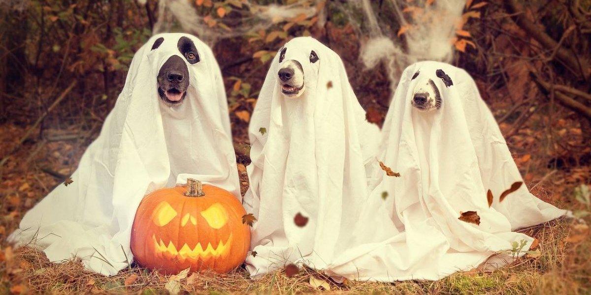 Los mejores disfraces de Halloween para perro en Instagram