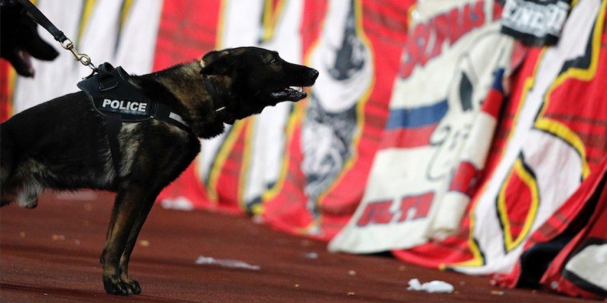 VIDEO. Perro policía se roba el show durante un juego de Liga Mayor