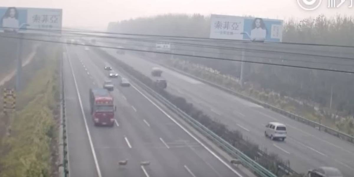 China: tres ovejas cruzan carretera y provocan un mortal accidente