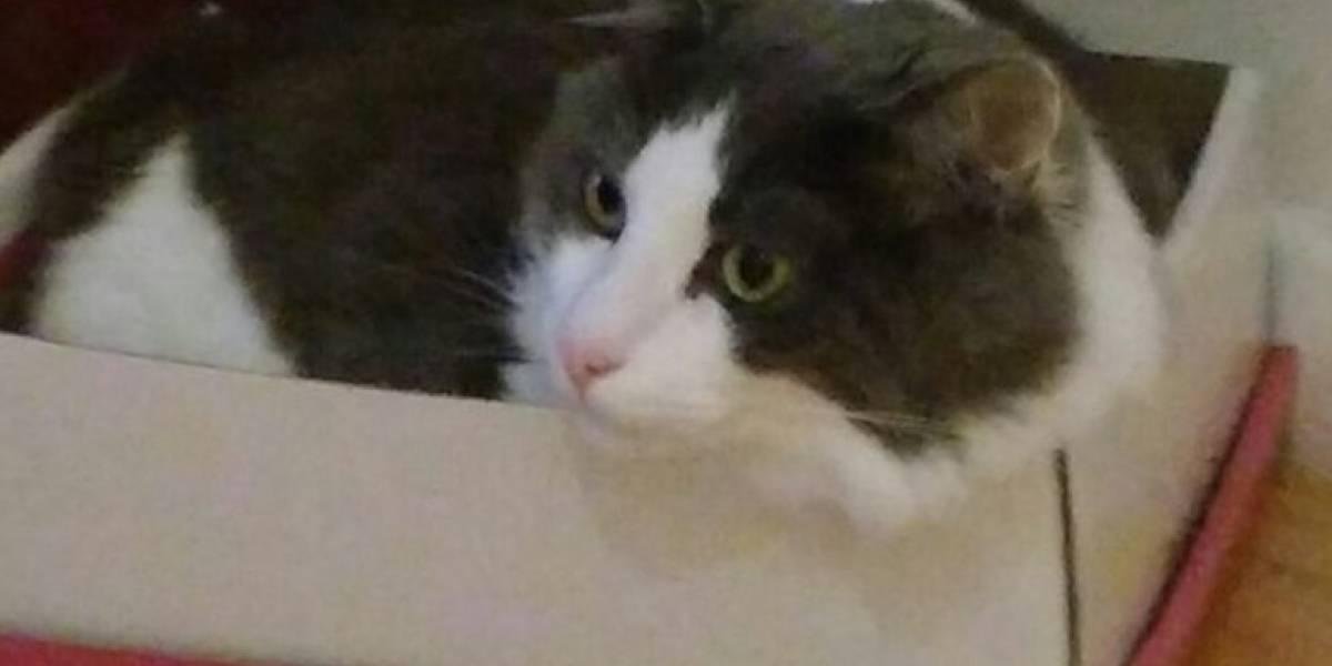 Lo más increíble que leerás hoy: mujer revisa las fotos de su celular y descubre que su gato se saca selfies