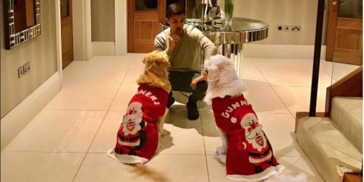 Arsenal sorprendió a Alexis con regalo de Navidad adelantado para sus perros