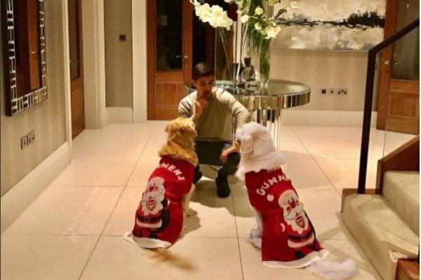 Los perros de Alexis disfrutan de sus regalos / imagen: Instagram Alexis Sánchez