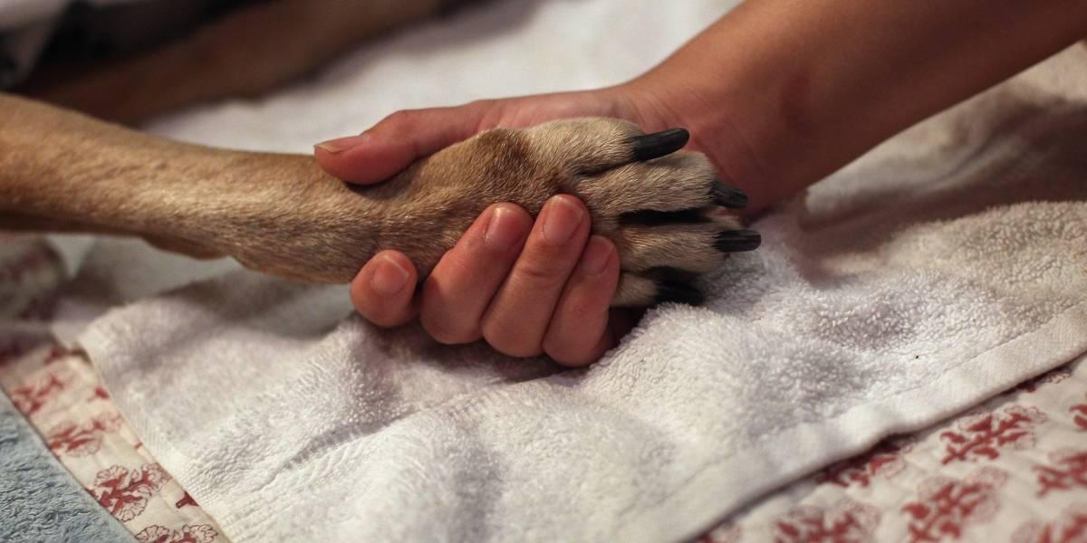 Estaba muriendo en la calle y su fiel mascota no dejó que nadie se le acercara para ayudarlo