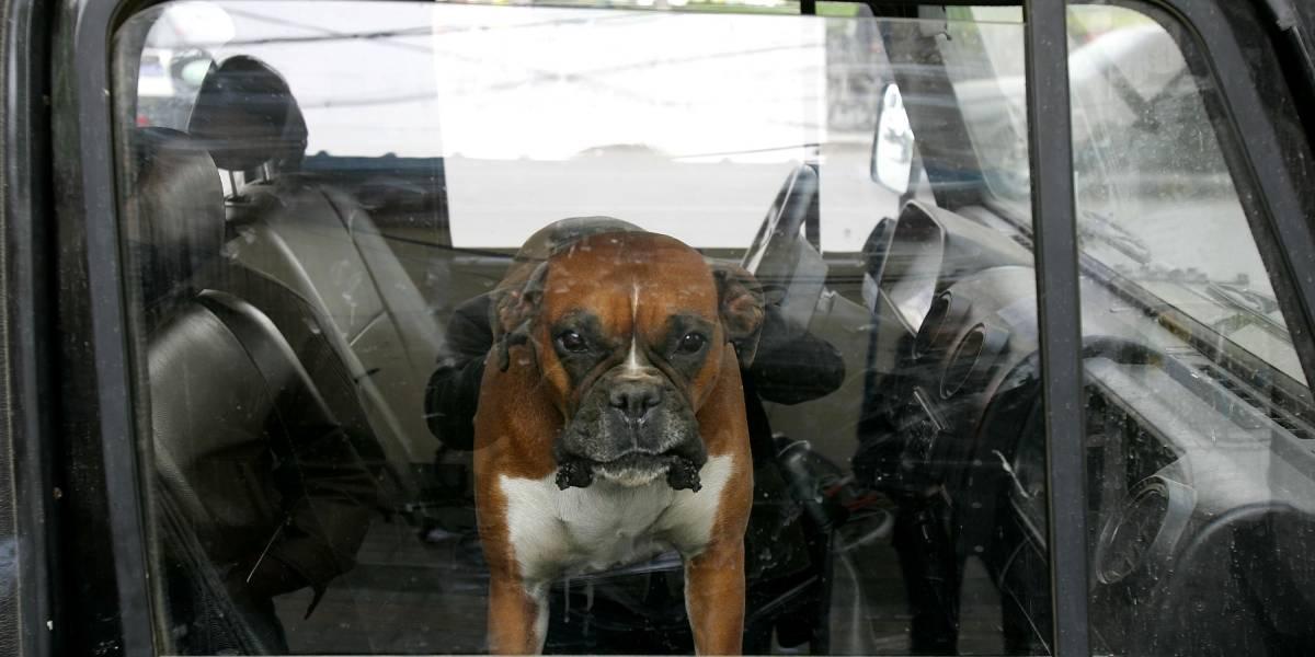 Dejó morir asfixiados a tres perros tras mantenerlos encerrados por horas y a todo sol en una camioneta que robó