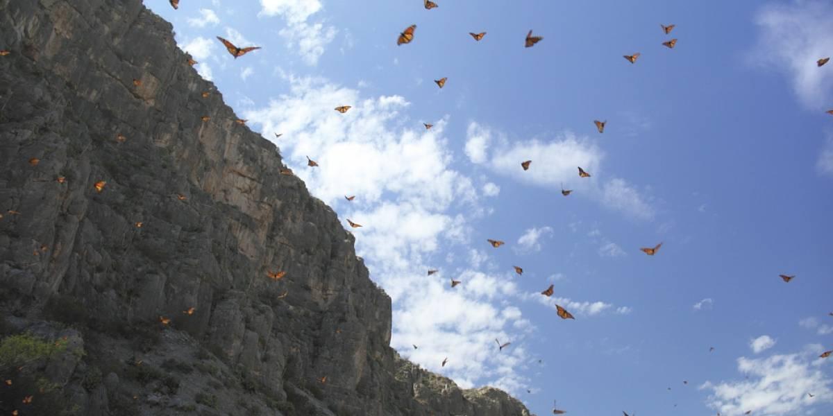 ¿Dónde están los parques nacionales y áreas protegidas de México?