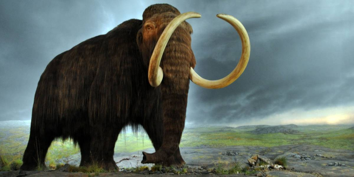 ¿Por qué casi todos los fósiles de mamut eran de machos? Simple, porque eran más estúpidos que las hembras