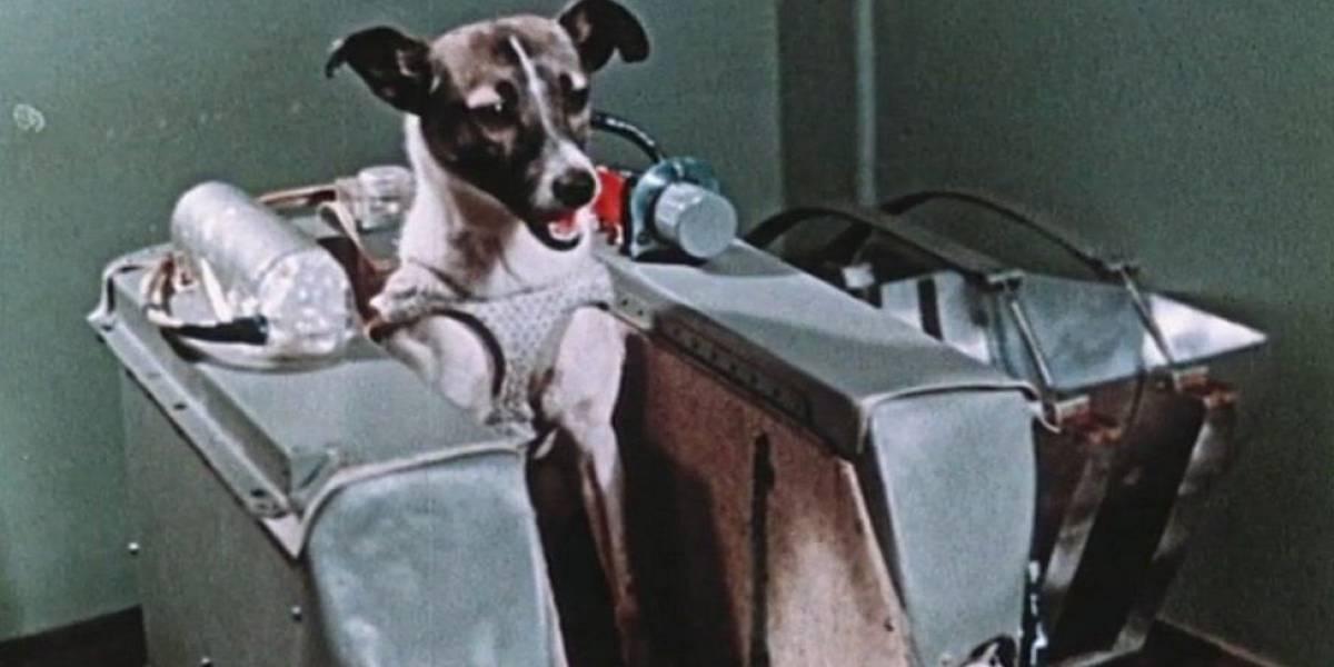 """La increíble odisea de Laika, la perrita """"pionera"""" enviada a morir al espacio hace 60 años"""