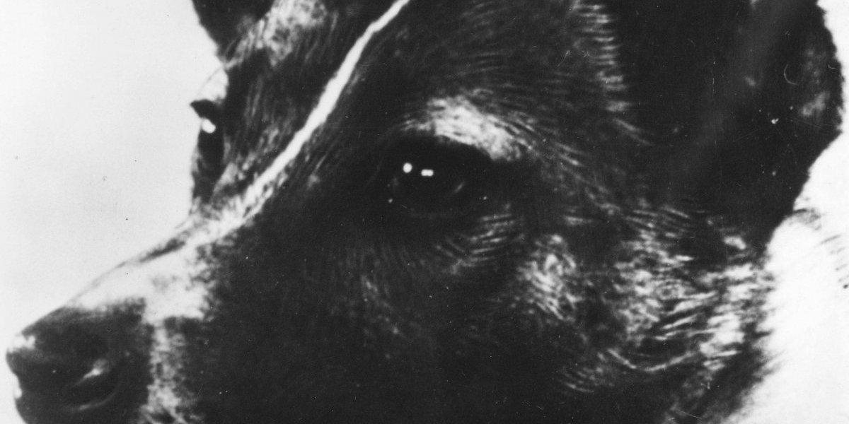 'Laika', la perrita callejera que la Unión Soviética mandó a morir al espacio