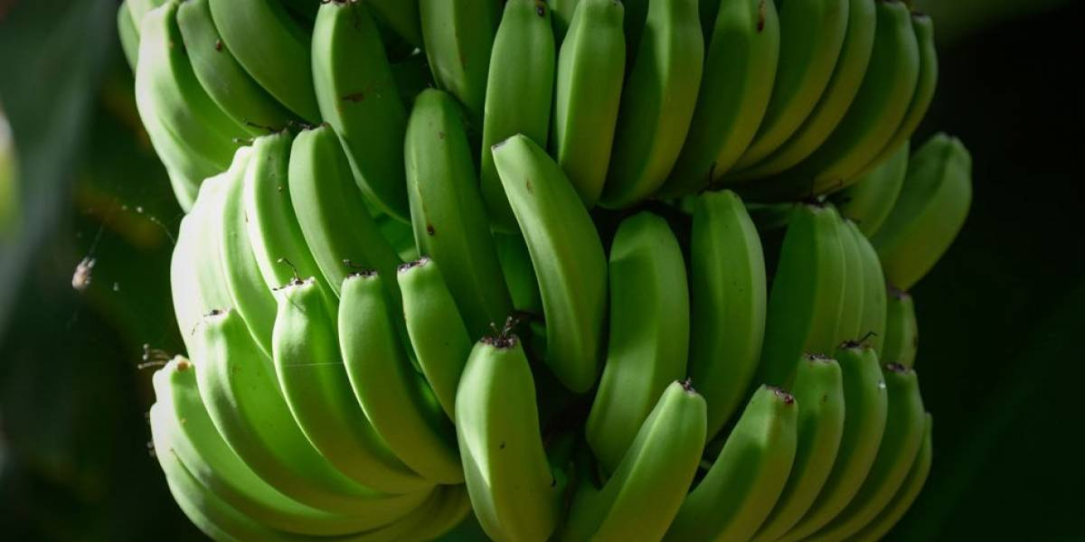 Cómo el furor por las bananas centroamericanas y la carne argentina llevaron a la creación de una cadena fría que revolucionó el mundo