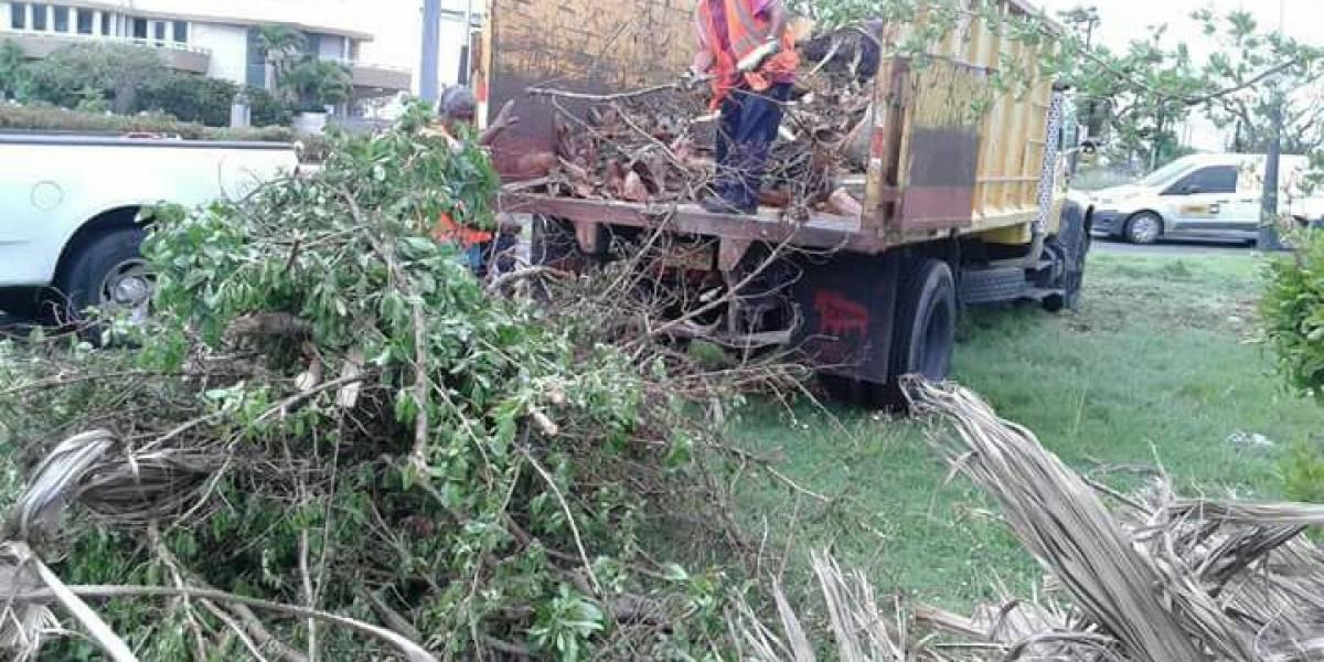 Irma y María generaron millones de yardas de escombros