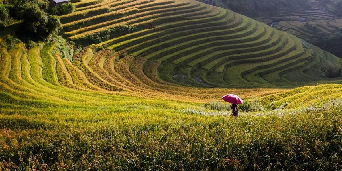 Comercio y fomento del empleo serán prioritarios en cónclave de la APEC en Vietnam