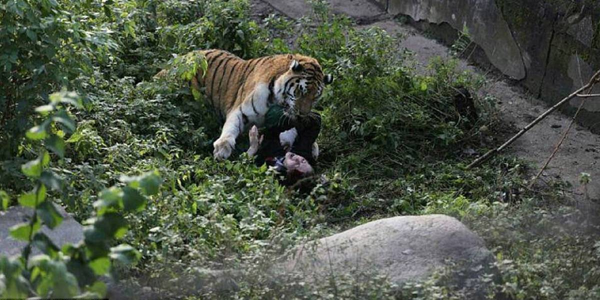 Tigre siberiano ataca cuidadora em zoológico na Rússia; turistas flagram momento