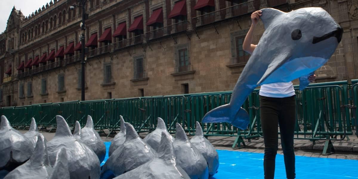 Muere vaquita marina capturada por investigadores en México
