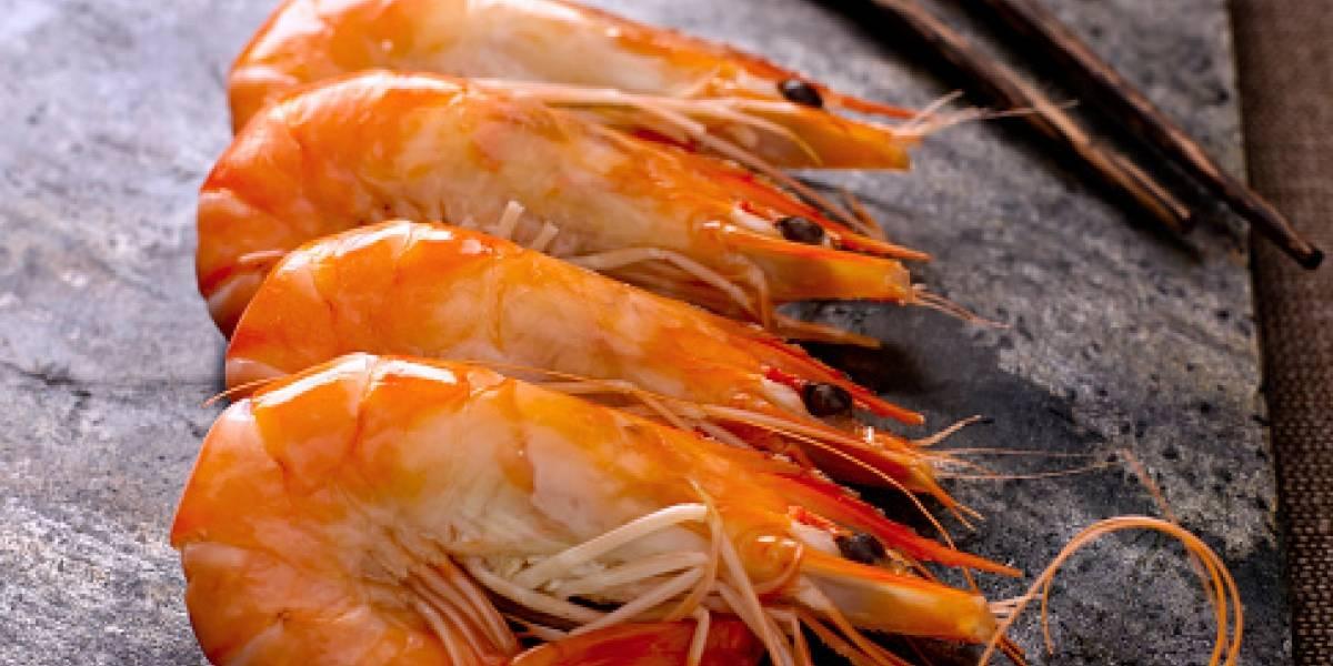 Se inicia el jueves en el litoral ecuatoriano la veda del camarón pomada