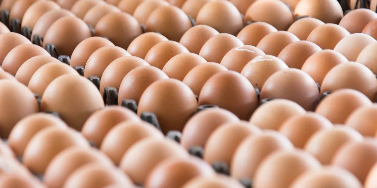En riesgo industria de huevos del País por falta de luz