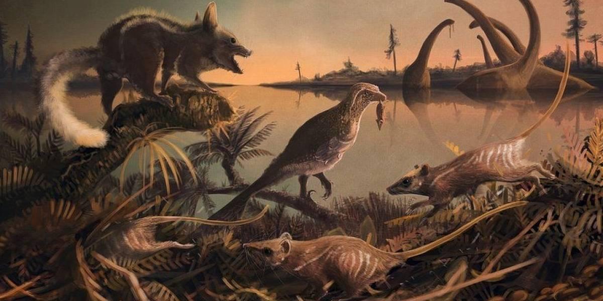 """Encuentran los restos fósiles """"más antiguos"""" de nuestros ancestros"""