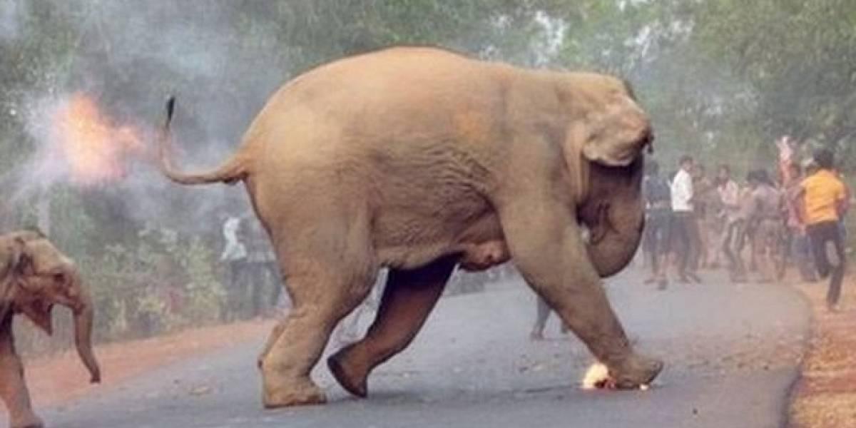 La dramática imagen de una cría de elefante en llamas que gano un concurso de fotografía en India
