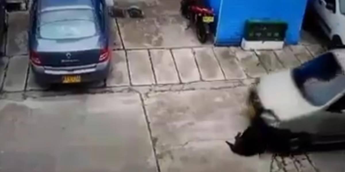 Hombre le pasó por encima el carro a un perrito que dormía en una calle de Soacha