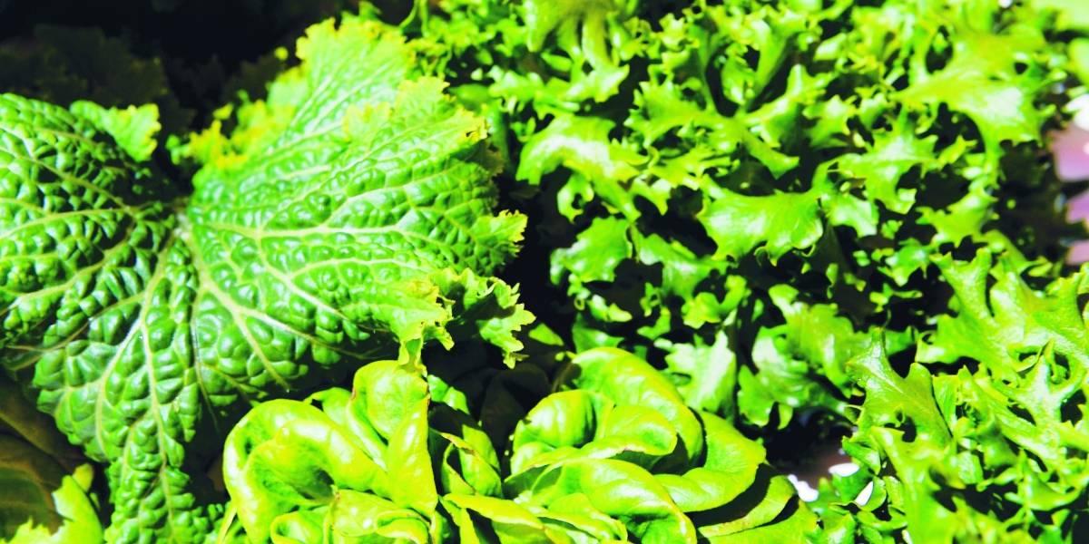 Comida de laboratorio: ¿Revolución alimentaria?