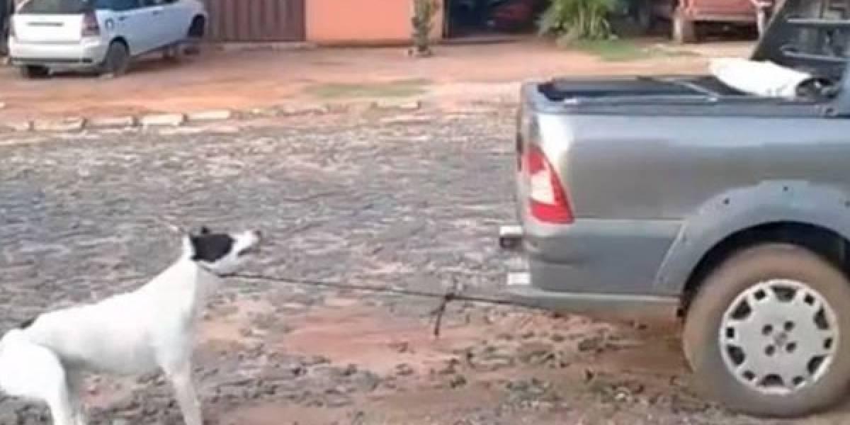 Atan a perro a camioneta y lo arrastran hasta morir