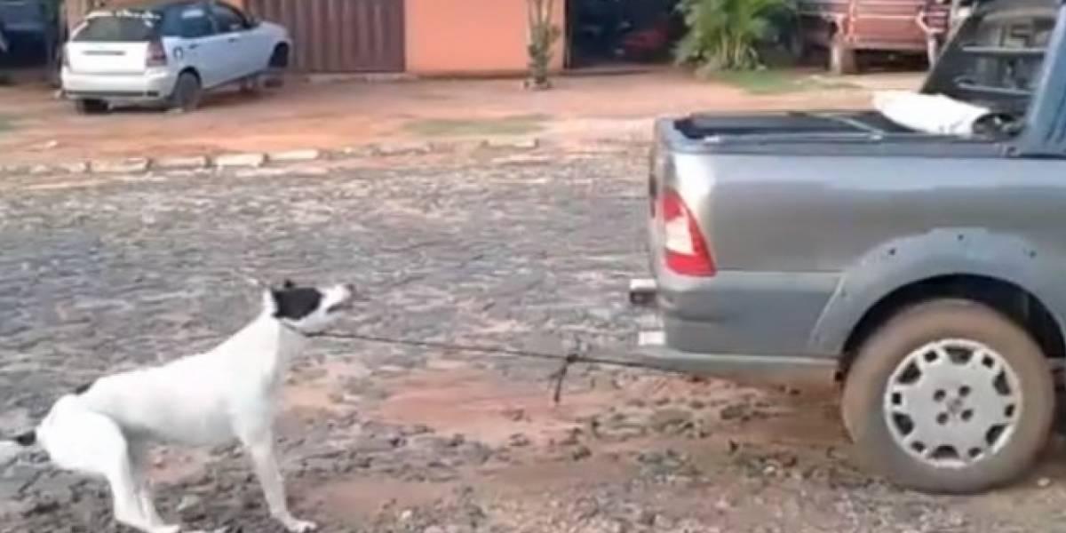 Polémica por perro maltratado y sacrificado terminó con la captura de las responsables