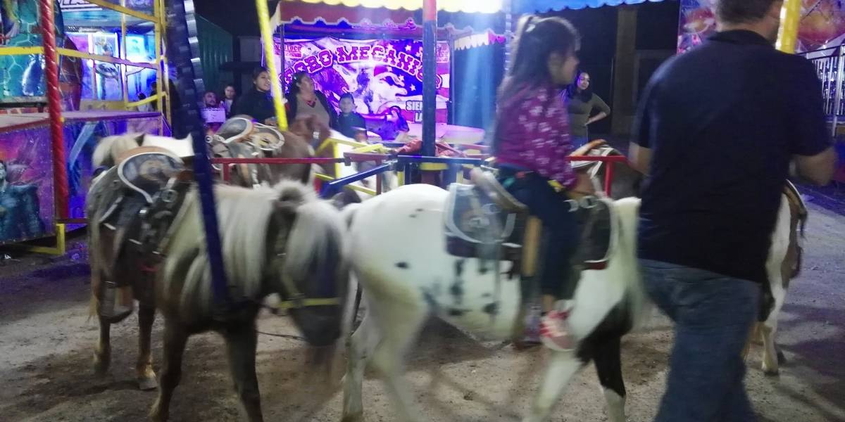 VIDEO: Usan ponys reales en carrusel de Orizaba