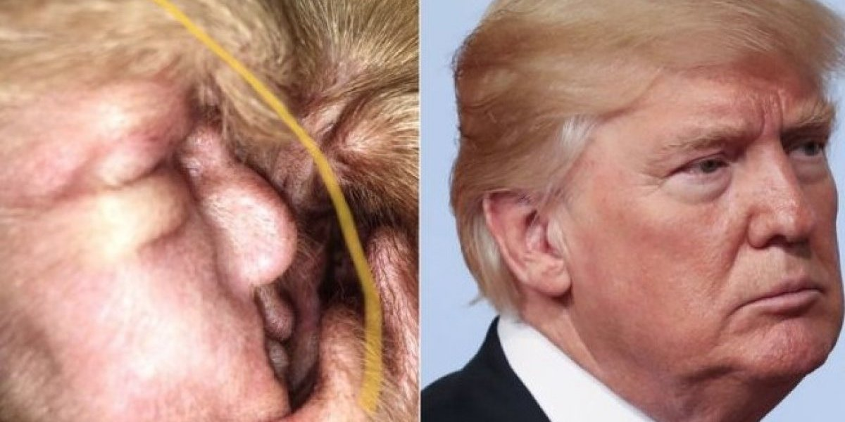 Esto es lo mejor que verás hoy: ¿Qué hace Donald Trump en la oreja de un perro?