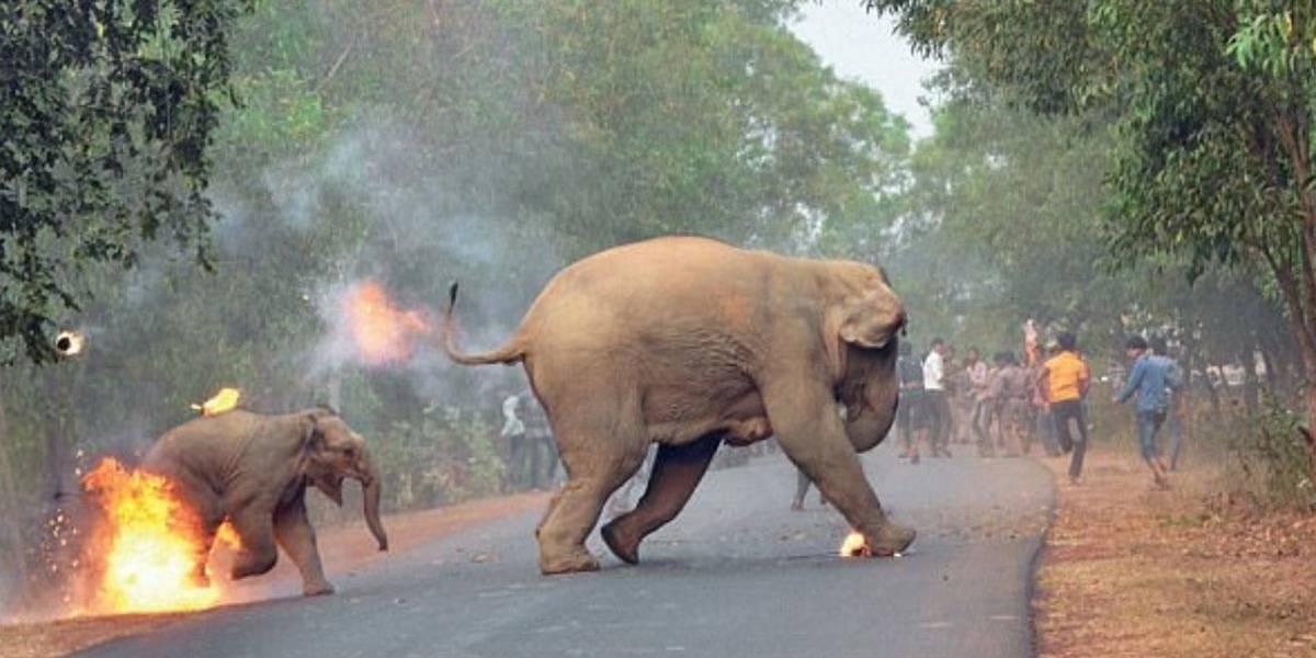 Foto de bebê e mãe elefante fugindo após serem incendiados é premiada