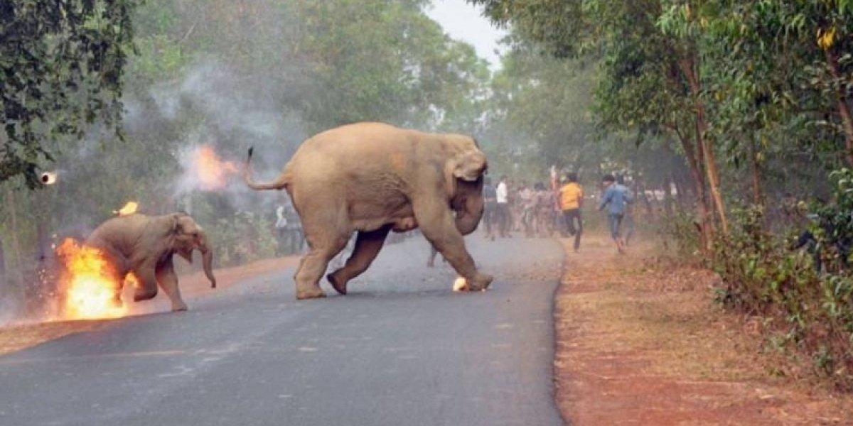 'El Infierno está aquí': la foto que revela la crueldad del maltrato animal