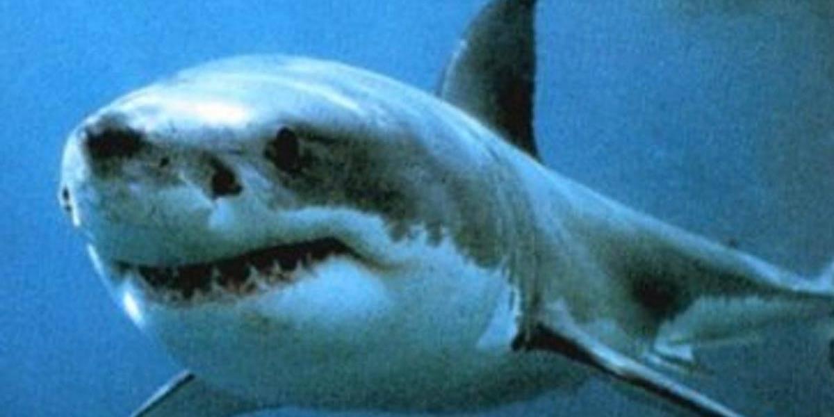 Tubarões fazem Pernambuco estudar fechamento de praia