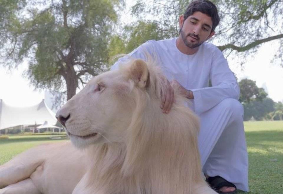 Xeque Hamdan bin Mohammed bin Rashid al Maktoum, 34 anos, usa o codinome Fazza3 nas redes sociais | Reprodução/Instagram