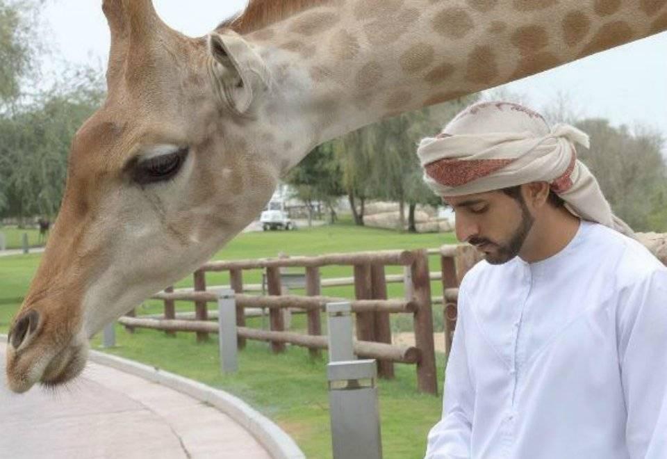 Quem o segue em sua conta no Instagram (@faz3), acompanha as aventuras diárias do príncipe | Reprodução/Instagram