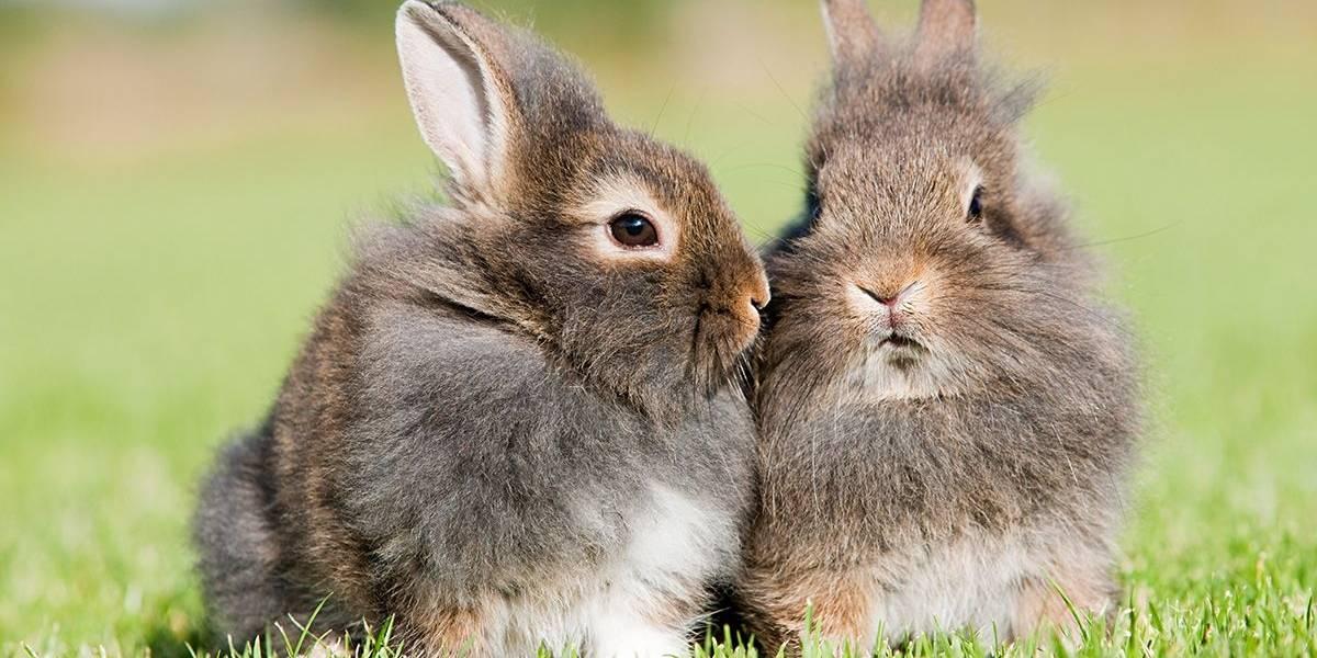Indignación por zoológicos daneses que piden a sus visitantes que traigan todas las mascotas posibles para alimentar a los animales