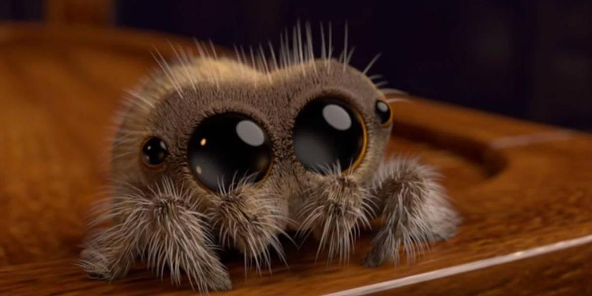 Filhote de aranha esbanja fofura e conquista o YouTube