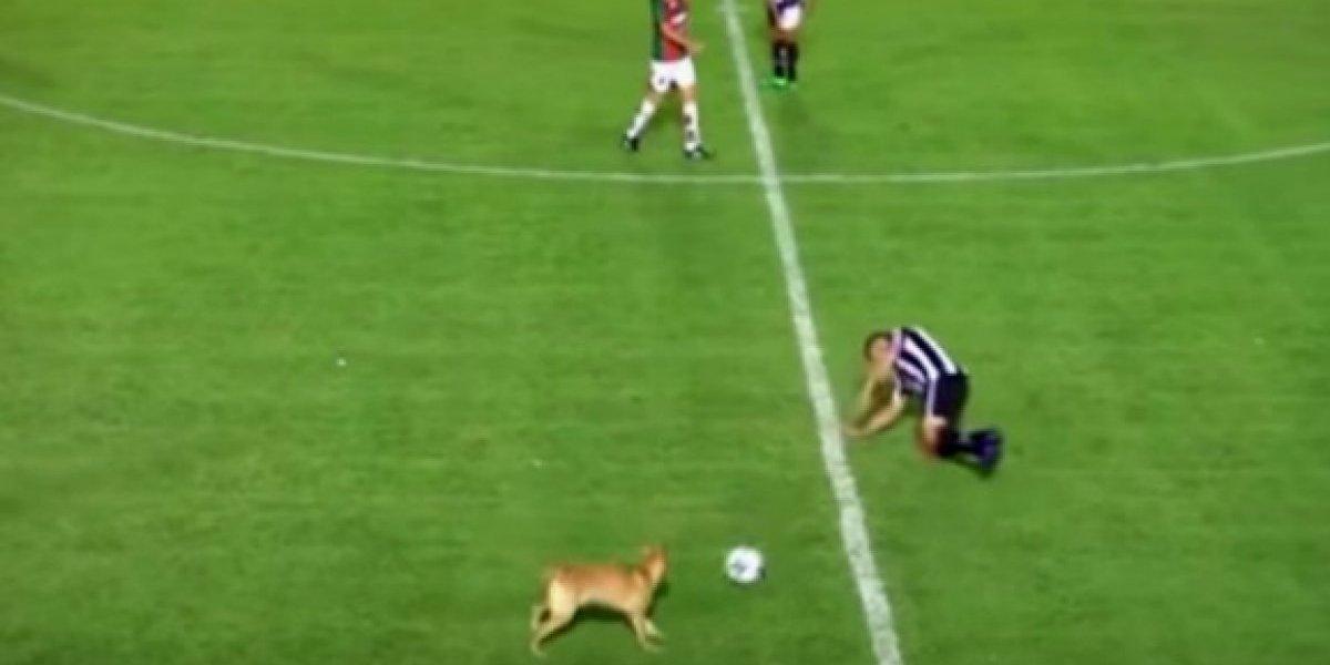 VIDEO: Canino entra al campo en pleno partido y comete falta a un jugador