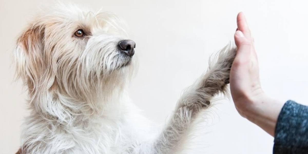 ¿Cómo puede ejercitar a su perro anciano?