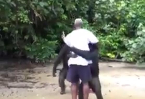 Video: Así agradecen los animales a los humanos que los rescataron