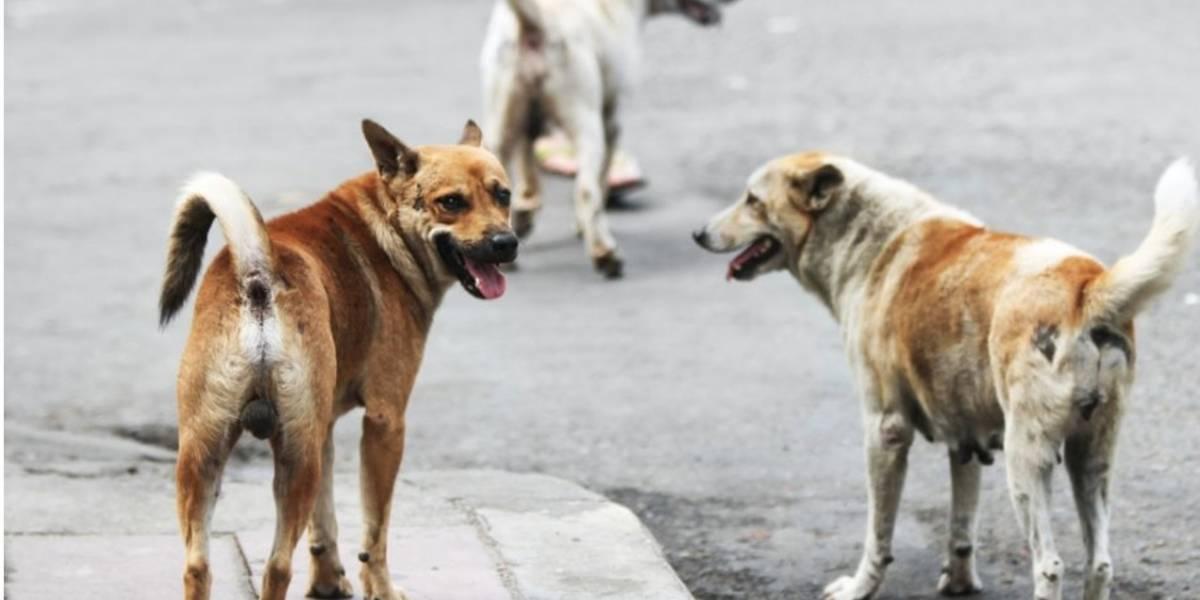 Lo que ciudadanos proponen hacer con los perros en Argentina te pondrá los pelos de punta