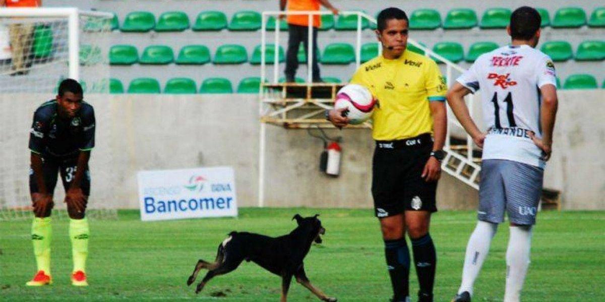 Un perro se metió a un partido de la Liga de Ascenso y burló a las autoridades