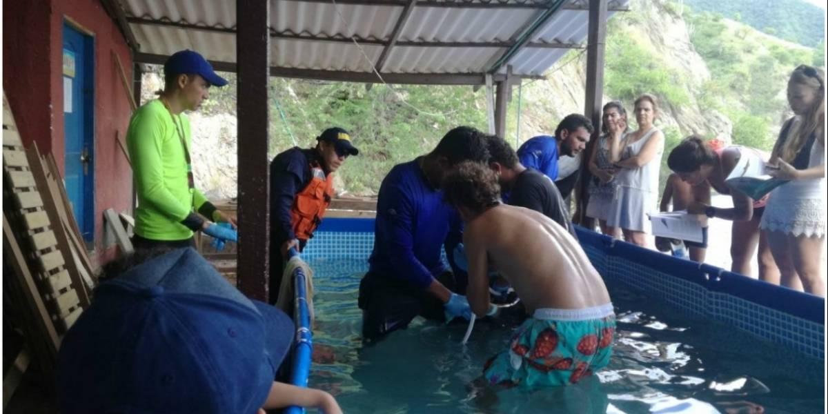 Armada Nacional rescató un delfín varado en aguas de Santa Marta