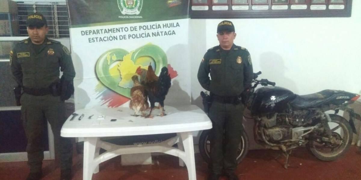 Crítican a la policía por presentar a tres gallinas como material incautado en robo de un menor