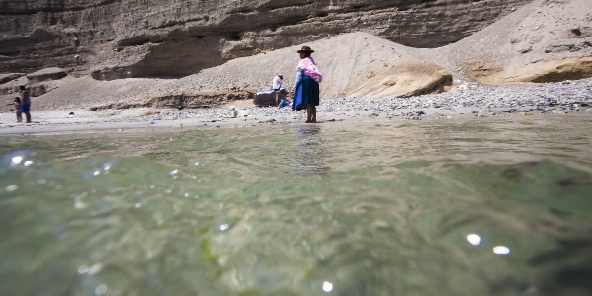 Tortugas y aves muertas aparecen en Mejillones tras derrame de ácido sulfúrico en el mar