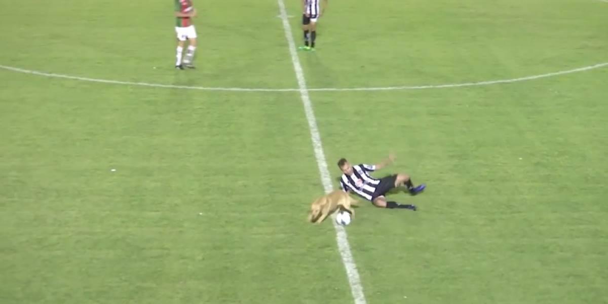 Falta, árbitro: el increíble foul de ¡un perro! en el ascenso del fútbol argentino