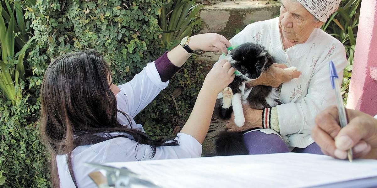 Morte por febre maculosa deixa bairros de Santo André em alerta
