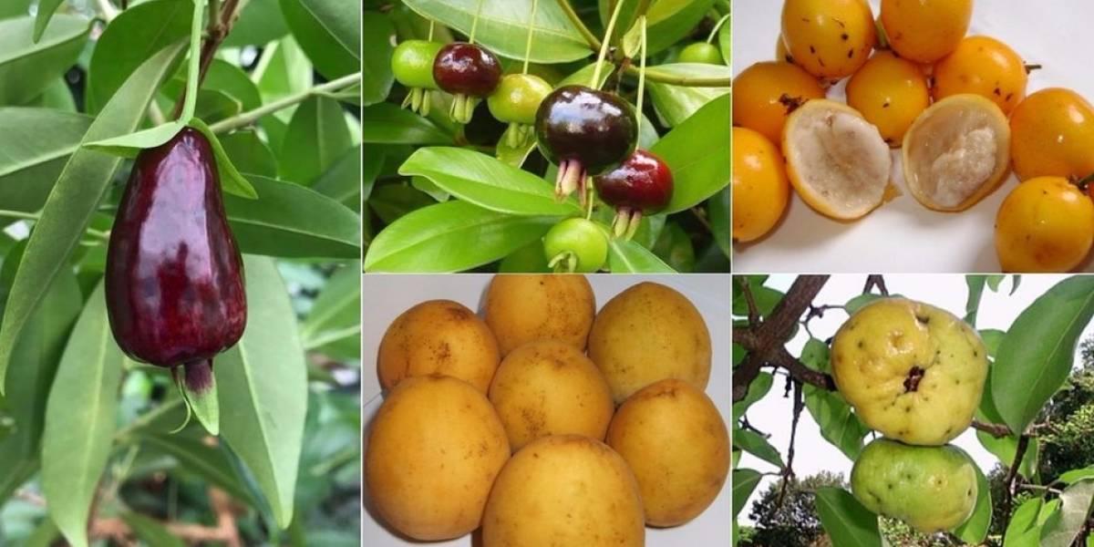 """Las desconocidas frutas brasileñas que pueden convertirse en los """"superalimentos"""" del futuro"""